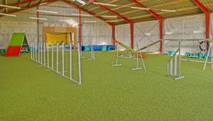 Hundetræningshal - hundehal til indendørs hundetræning
